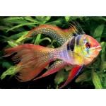 Популярные виды рыбок для аквариума