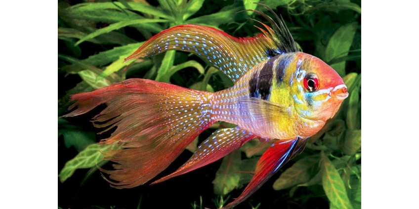 Популярні види рибок для акваріума